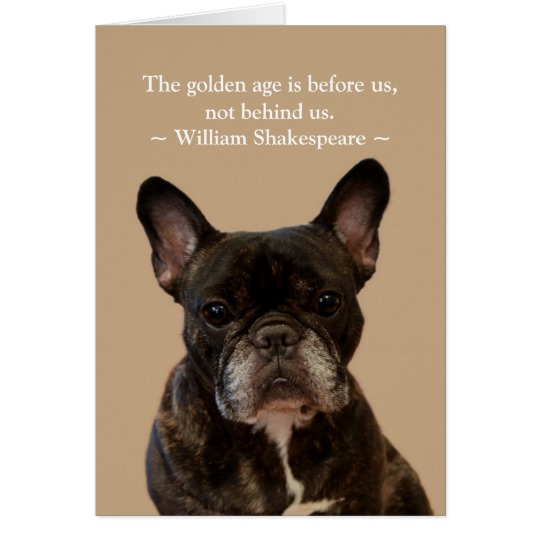 french bulldog birthday picture ; french_bulldog_shakespeare_happy_birthday_card-r356864e21ea8440684cde233080a06d5_xvuat_8byvr_540