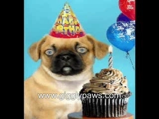 funny birthday clips ; AASws