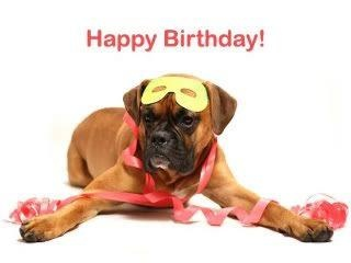 happy birthday boxer picture ; 05f2454023376b5c850c05be3819166e--birthday-animals-dog-birthday