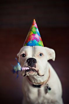 happy birthday boxer picture ; 20d83a9ca70fdcbc577bb230bd07abd2--boxer-dogs-boxers