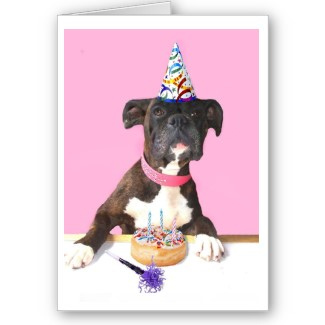 happy birthday boxer picture ; 3452856954_cdbb89a878