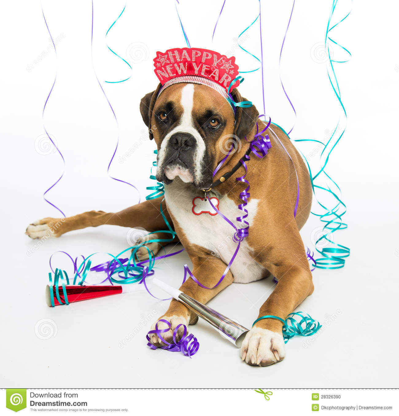 happy birthday boxer picture ; boxer-dog-happy-new-year-28326390