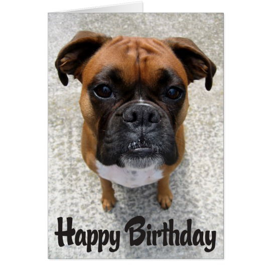 happy birthday boxer picture ; boxer_puppy_dog_happy_birthday_card_verse-r7e7679e378bd4fe498271fe6138e05f3_xvuat_8byvr_540