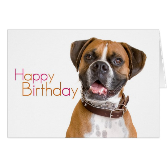 happy birthday boxer picture ; happy_birthday_boxer_card-re510902b3ba24a51ab8d13ff8ec78644_xvua8_8byvr_540