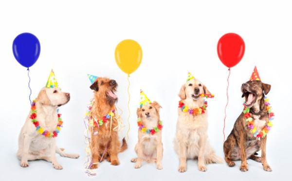 happy birthday clip art with dogs ; happy-birthday-pictures-with-dogs