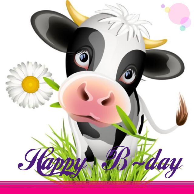 happy birthday cow meme ; 487ac84f2bcd848aac8cf4a46f9ee5c5---case-iphone-cases