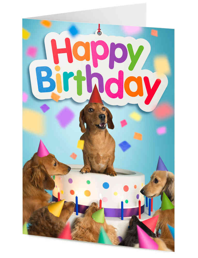happy birthday dachshund ; N08194-Dachshund-and-friends_ml
