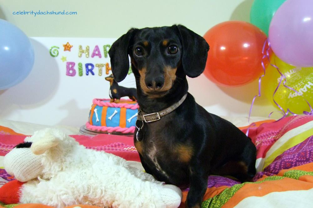 happy birthday dachshund ; dachshund-birthday-party