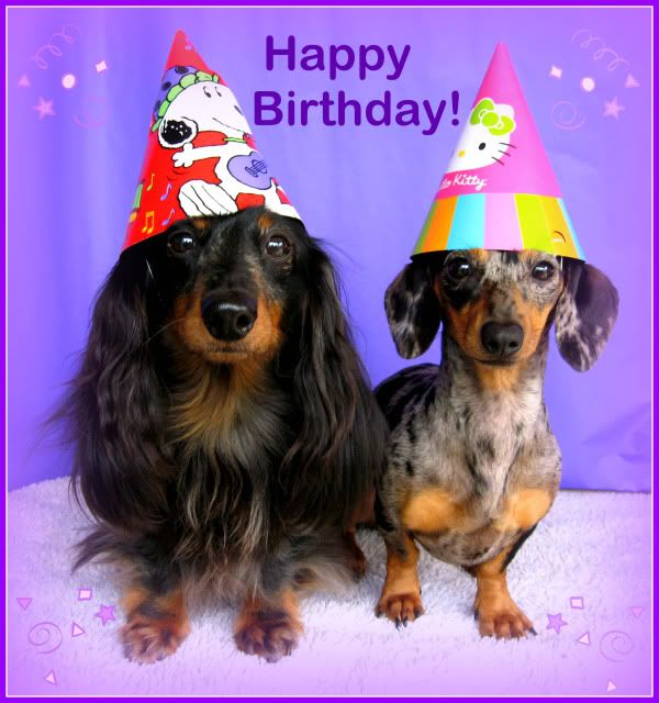 happy birthday dachshund ; dca9f2f8ff3f97e2147264d2f4ac4f7f