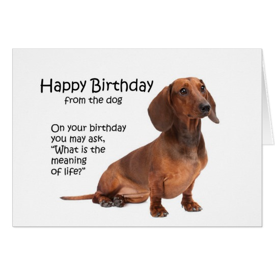 happy birthday dachshund ; funny_dachshund_birthday_card-r7400d4581e42428494eb38060fd25ce1_xvuak_8byvr_540