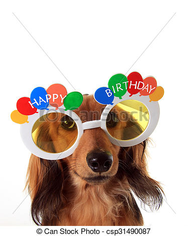 happy birthday dachshund ; happy-birthday-dachshund-pictures_csp31490087