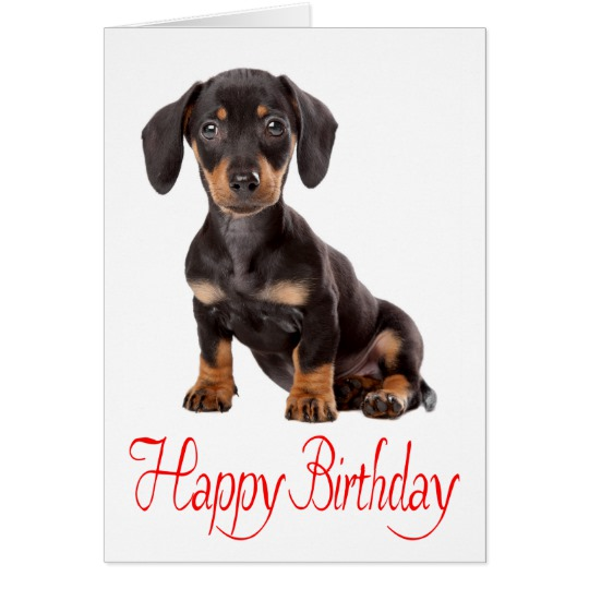 happy birthday dachshund ; happy_birthday_dachshund_puppy_dog_card-r03510e4846c34796b5f914f74ac436c2_xvuat_8byvr_540