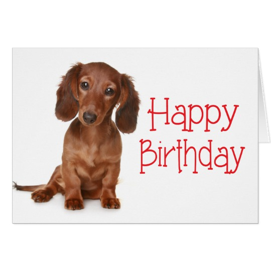 happy birthday dachshund ; happy_birthday_dachshund_puppy_dog_card-rdb5bb7c64d144a4d95e34893aeb5e13e_xvuak_8byvr_540
