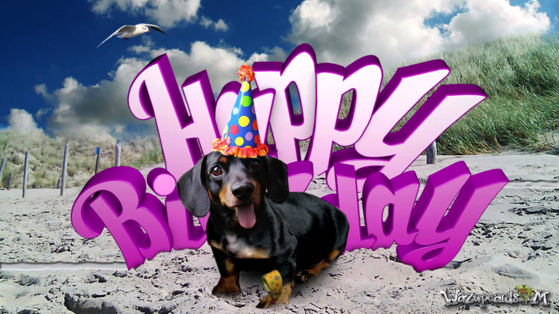 happy birthday dachshund ; maxresdefault