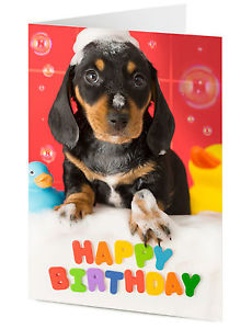 happy birthday dachshund ; s-l300