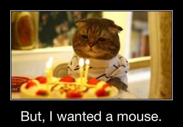 happy birthday funny posters ; Happy-Birthday-Cato-funny-animals-picture-