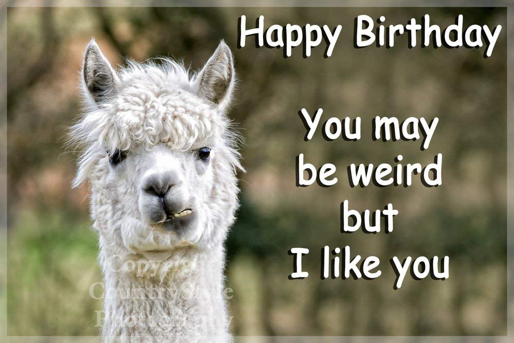 happy birthday llama ; 61ovUAHiQ3L