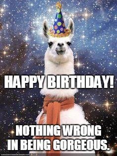 happy birthday llama ; Nothing-wrong-in-being-gorgeous