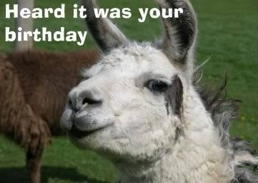 happy birthday llama ; TigsBday