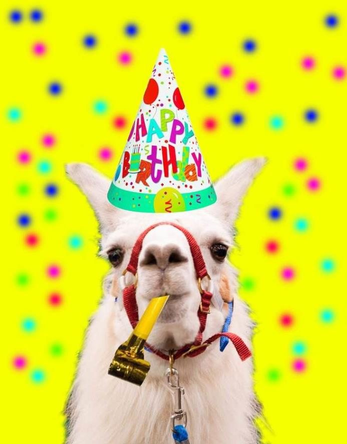 happy birthday llama ; c83caa8cce56e02a6bf895df8578f9ac