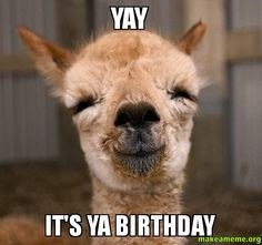 happy birthday llama ; ed0bab1333dafea92b5d7799f3274666