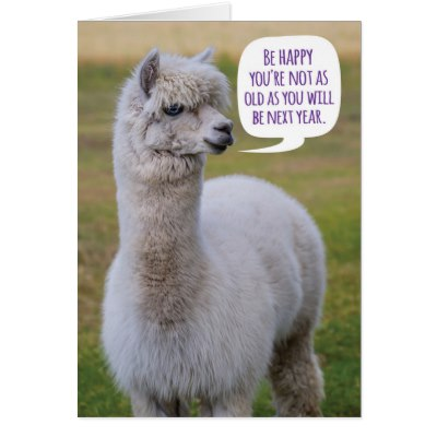 happy birthday llama ; funny_dolly_llama_birthday_wisdom_card-rf836a3278cb04a59b736619496f30a0a_xvuat_8byvr_400