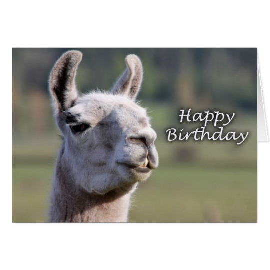 happy birthday llama ; happy_birthday_llama_llama_happy_birthday_card-r5bee239fd13f4178b43229b045a56b89_xvuak_8byvr_540