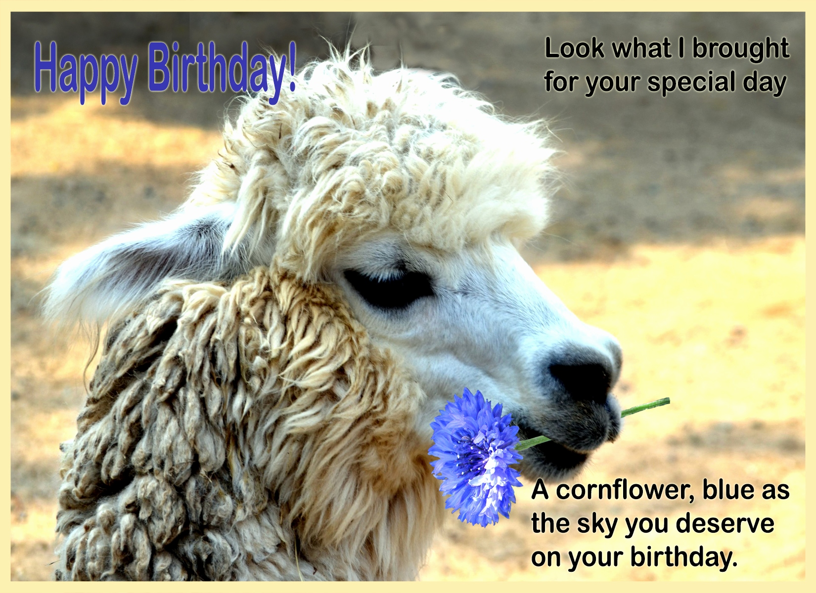 happy birthday llama ; llama-birthday-card-elegant-happy-birthday-cards-with-animals-of-llama-birthday-card