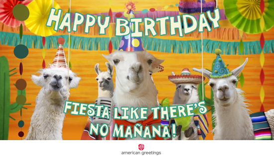 happy birthday llama ; social