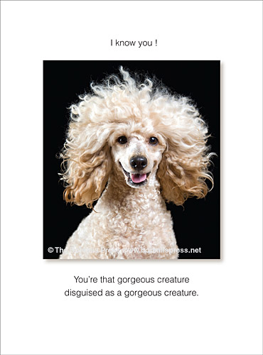 happy birthday poodle greeting cards ; 1026hba-birthday-card-photo-jacobs