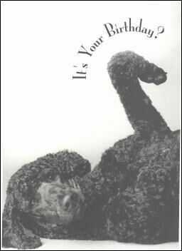 happy birthday poodle greeting cards ; MH34806