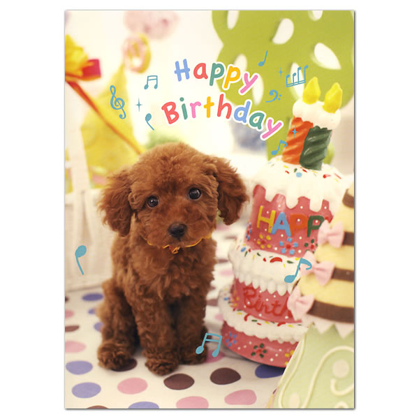 happy birthday poodle greeting cards ; happy-birthday-poodle-greeting-cards-b48-040