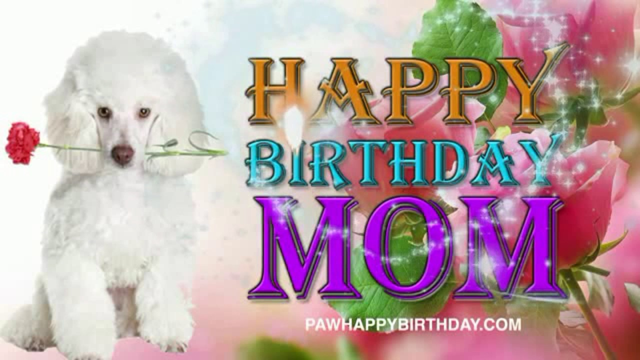 happy birthday poodle greeting cards ; maxresdefault