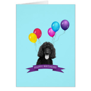 happy birthday poodle greeting cards ; poodle_dog_happy_birthday_greeting_card-r3abab5c6f3494a3080adfa6432f45bb7_xvuat_8byvr_307