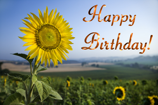 happy birthday sunflowers ; 310997