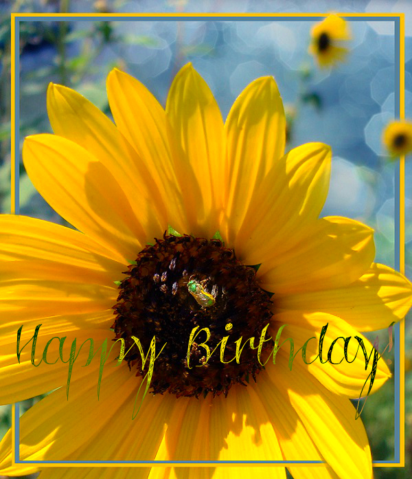 happy birthday sunflowers ; 9a8af67f0b075534d2fe6f5cfda7894d