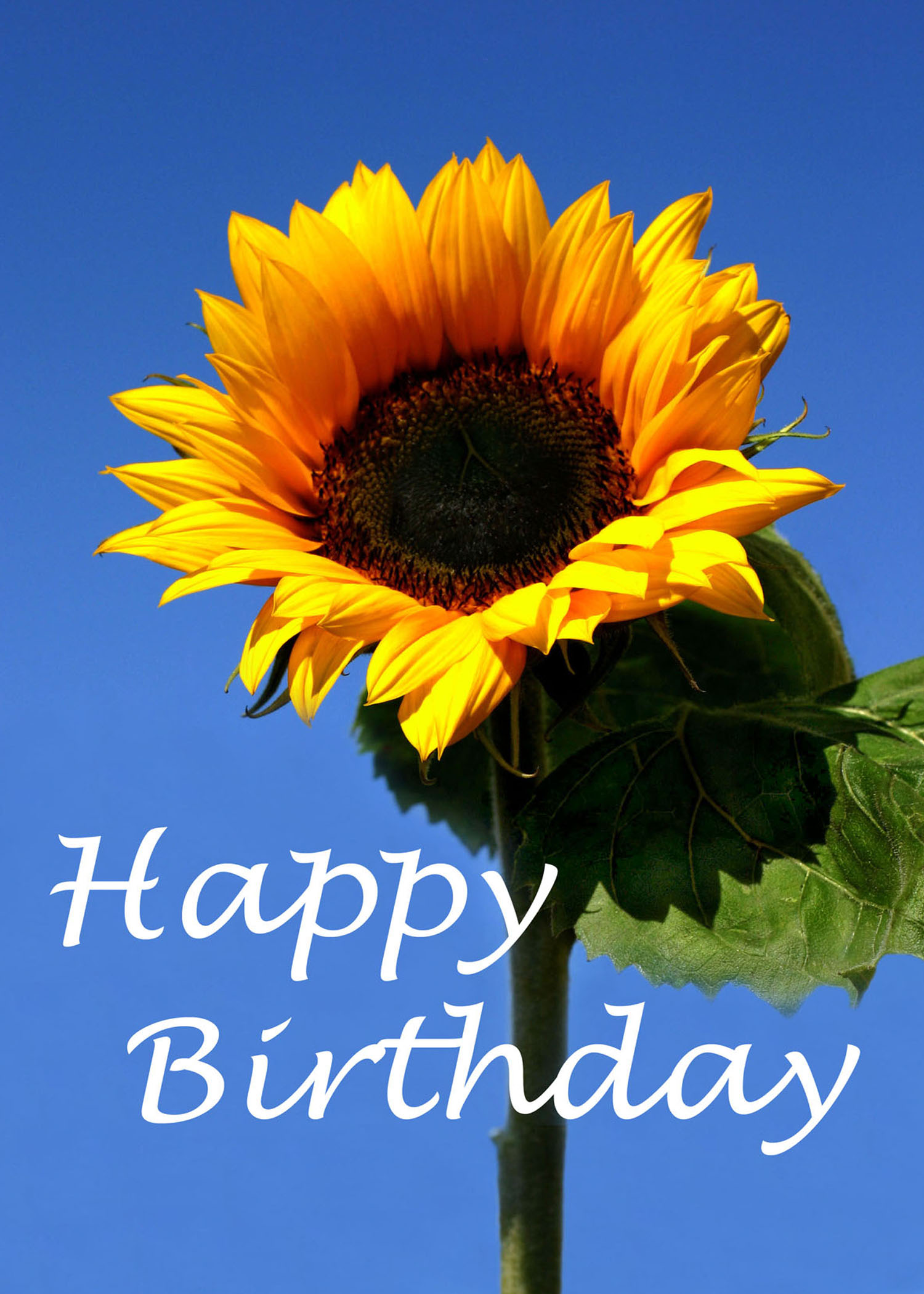 happy birthday sunflowers ; SALE-6X4-409