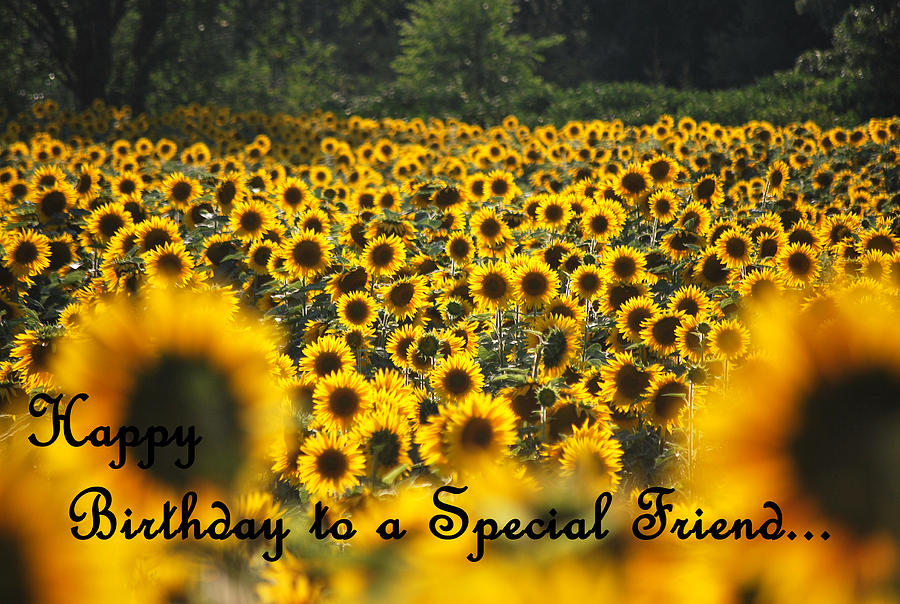 happy birthday sunflowers ; happy-birthday--special-friend-sunflowers-michelle-barlondsmith