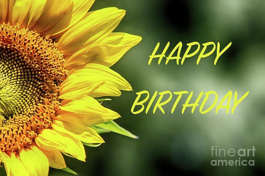 happy birthday sunflowers ; happy-birthday-sunflowers-tom-gari-gallery-three-photography