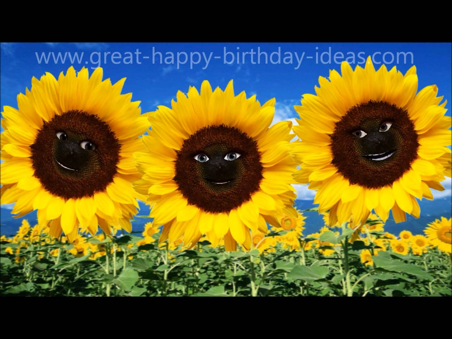 happy birthday sunflowers ; maxresdefault