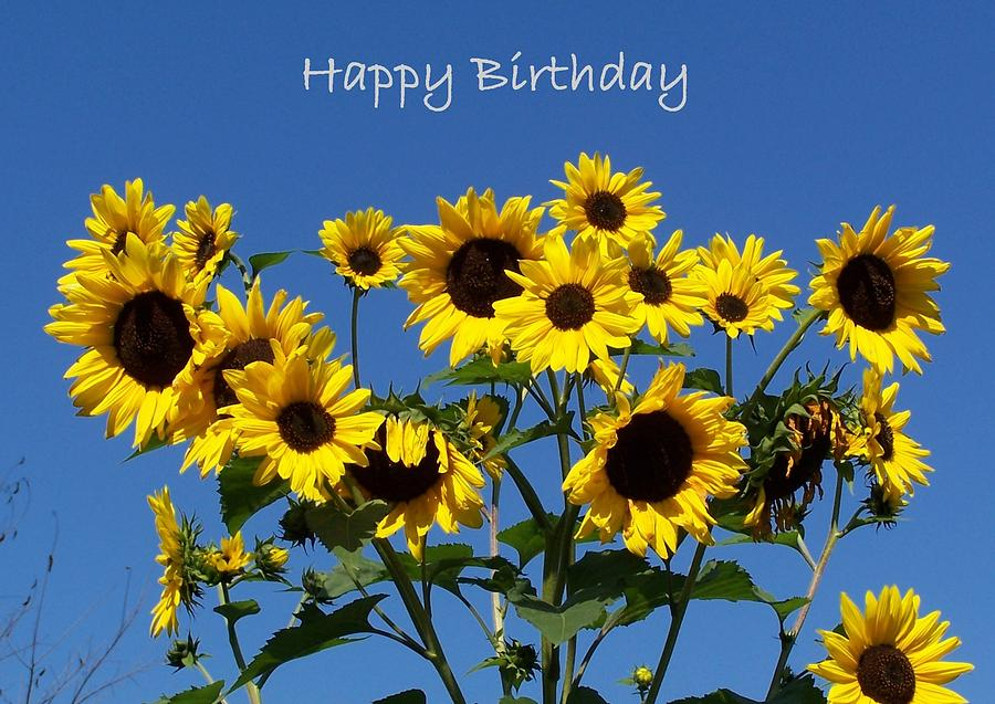 happy birthday sunflowers ; sunflowers-with-blue-sky-background-happy-birthday-holly-eads