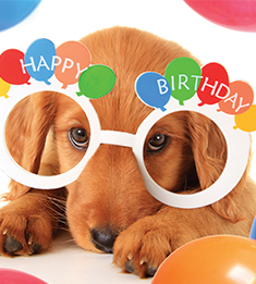 happy birthday veterinarian ; Happy_Birthday-1