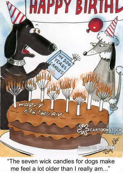 happy birthday veterinarian ; seasonal-celebrations-birthday-birthday_cake-cake-birthday_candle-candle-dren356_low