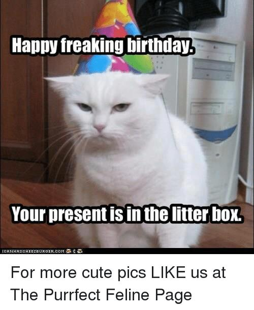 happy freaking birthday ; happy-freaking-birthday-your-presentisin-thelitter-box-for-more-cute-23653692