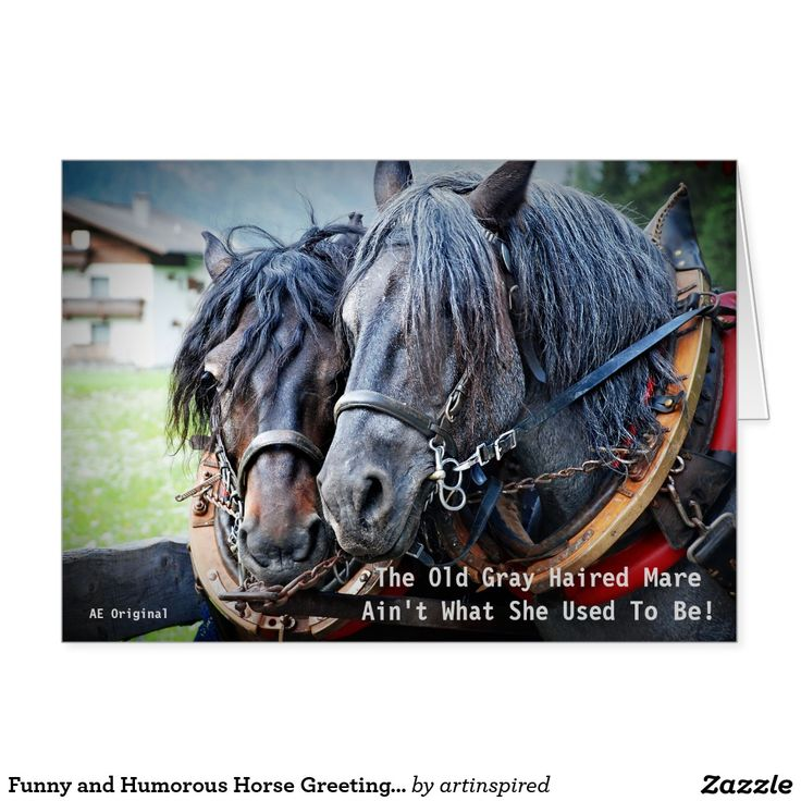 horse birthday card sayings ; 96586974b109d25a91e6da7a31a6dd2f--retirement-cards-horse-birthday