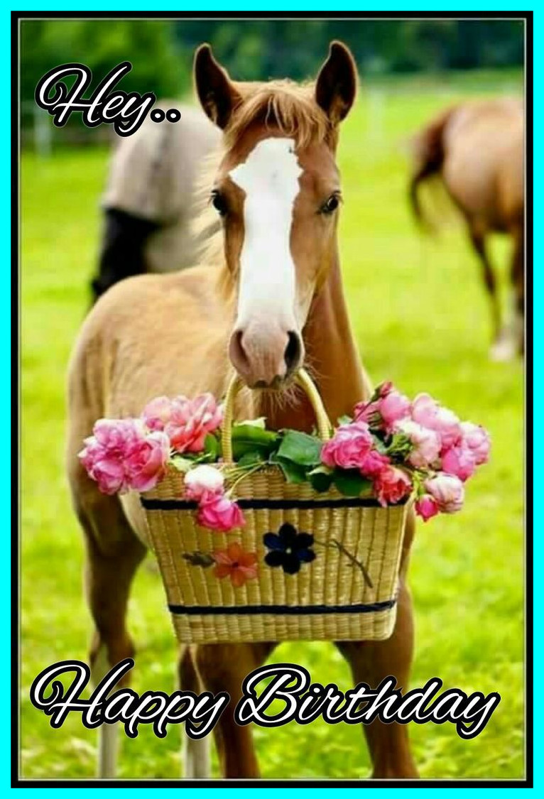 horse birthday card sayings ; amazing-best-horse-birthday-quotes-happy-for-cute-pet-wishes-inspiration-and-ideas