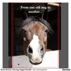 horse birthday card sayings ; horse-birthday-card-sayings-beautiful-horse-birthday-greetings-of-horse-birthday-card-sayings