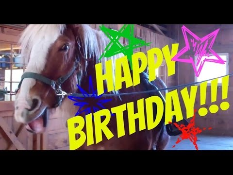 horse birthday card sayings ; hqdefault