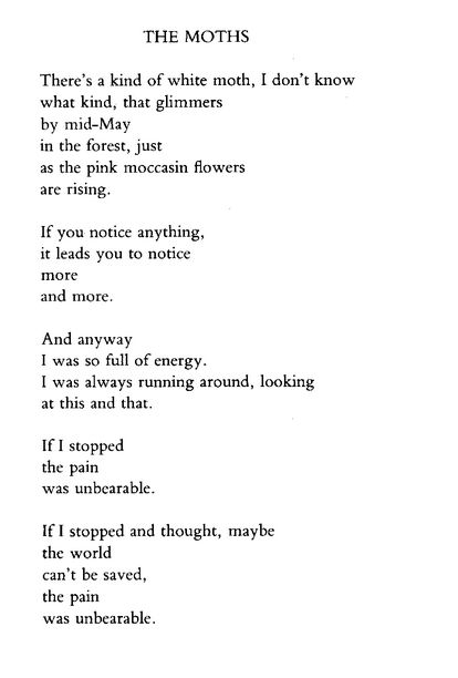 mary oliver birthday poem ; b127e68198d207139a51e0a9c2d633be--mary-oliver-poetic-justice