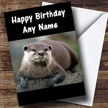 otter birthday card ; 71HdkHqC6NL